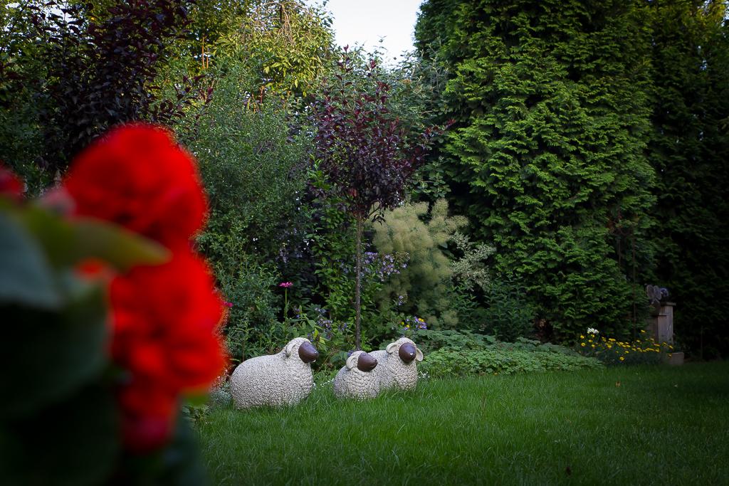 Spiegelborder: 'de schapen'