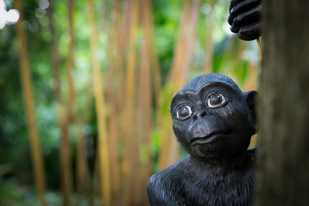 Jungletuin: 'Aapjes kijken'