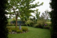 Morus Platanifolia 'Moerbijboom'